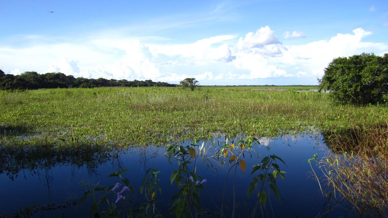 Pantanal tour - Mato Grosso, Brazil