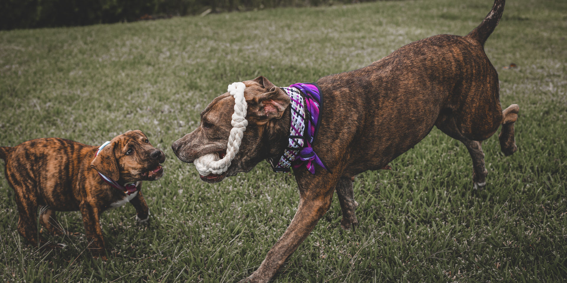 RUFFLY Lookbook – Pages 16 and 17 – RUFFLY Outfitted Dogs Playing with the Mother Hucker