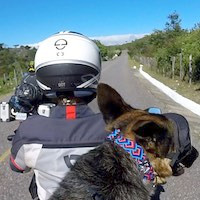 Dog wearing colorful collar rides motorcycle behind woman