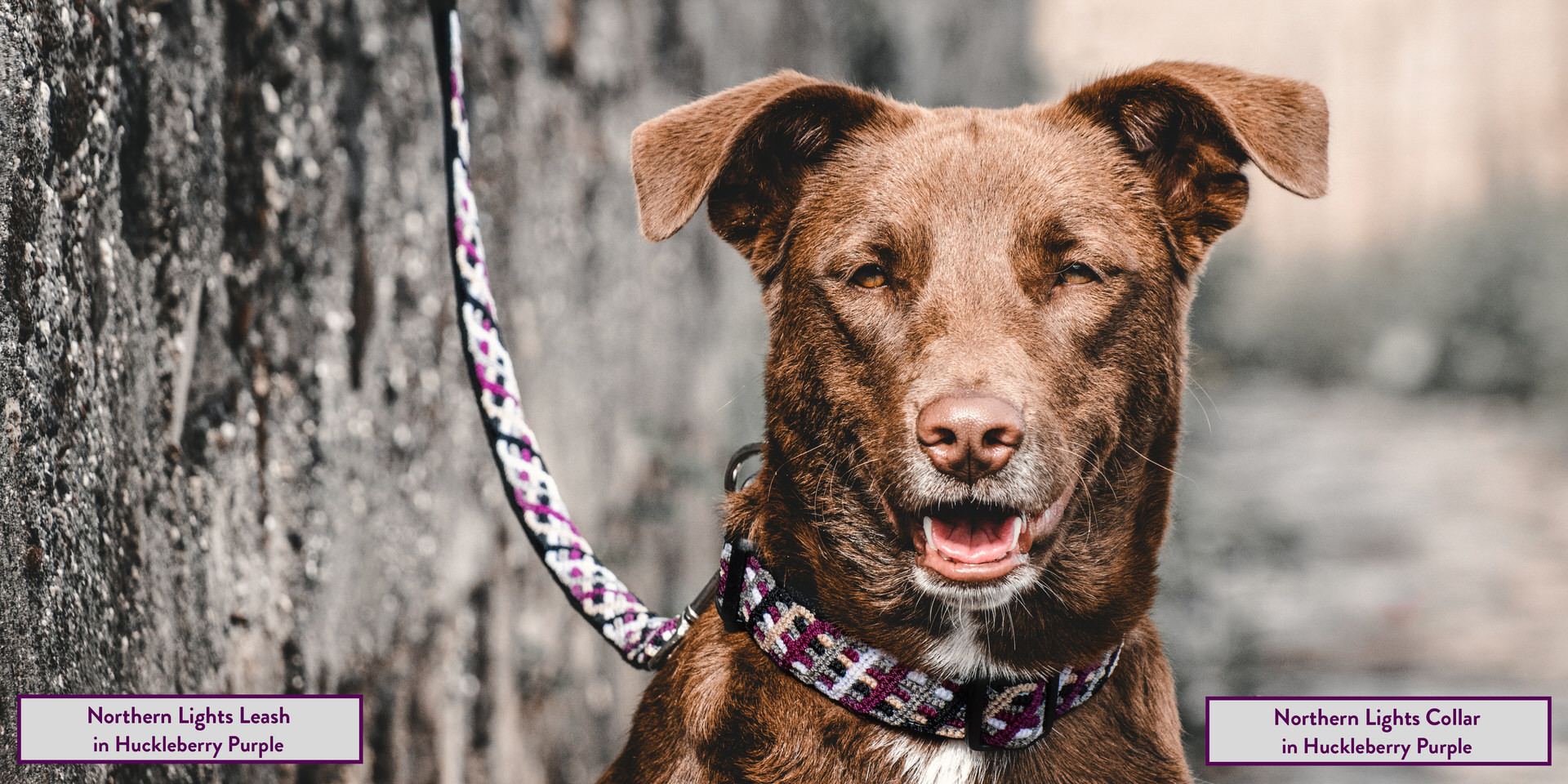 RUFFLY Lookbook – Pages 6 and 7 – Northern Lights Collar and Leash in Huckleberry Purple