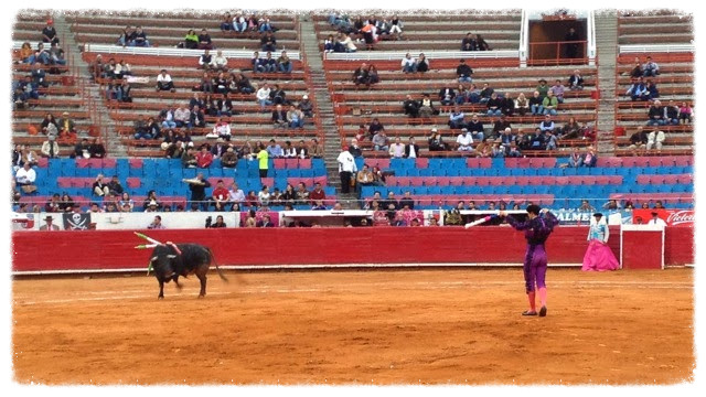 The banderillero studies the bull before the charge