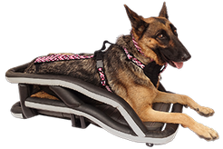 German Shepherd wearing handmade dog harness with waist belt while laying in motorcycle dog carrier