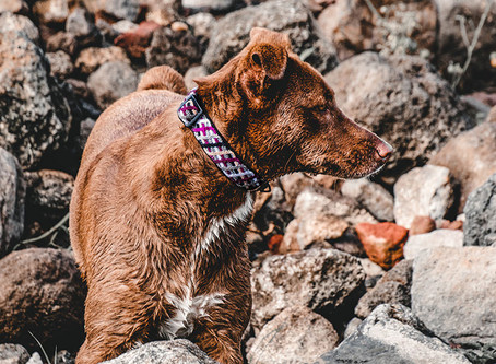 The Knotted Collection of Collars, Leashes, and Harnesses