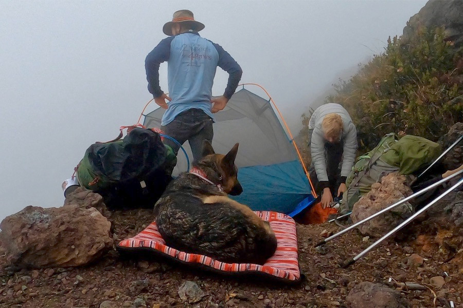 German shepherd dog lies on travel dog bed while man and woman set up text on mountainside.