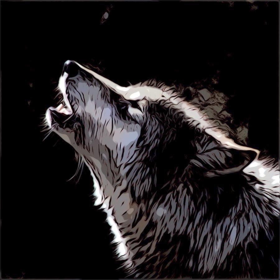 Comic cartoon wolf raising head and howling at dark sky