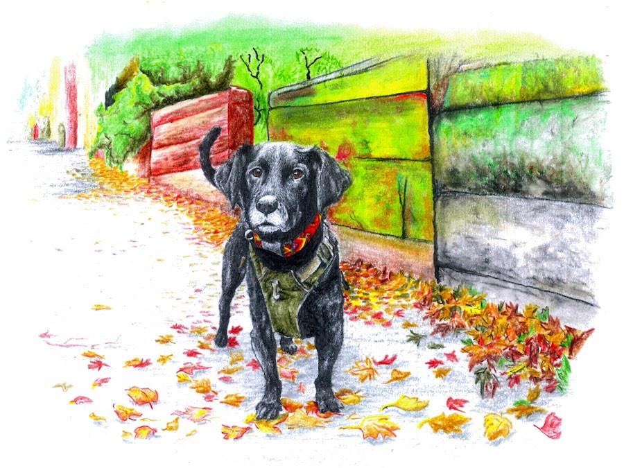 Black dog on street wears handmade macrame collar from Guatemala
