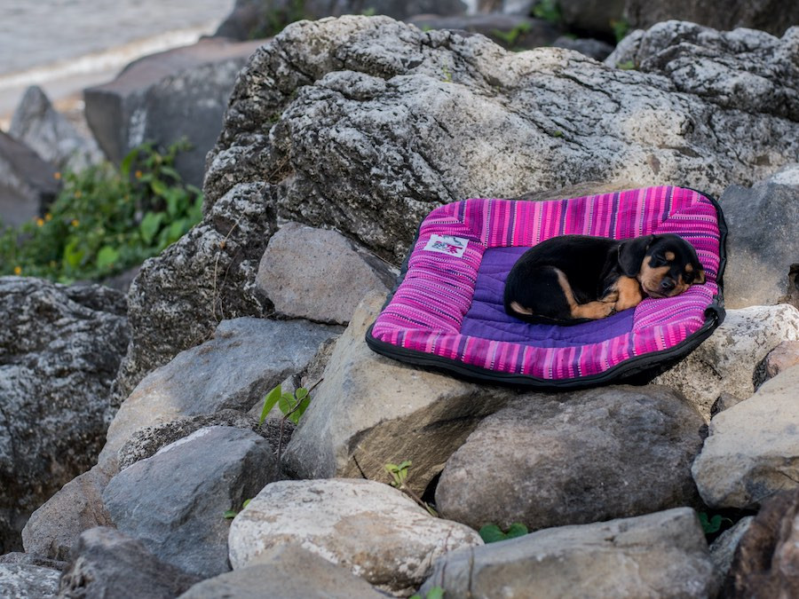 brown and black puppy dog sleeps on large dog travel bed on rocky outcrop