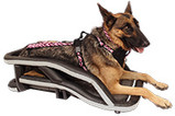 German Shepherd in K9 Moto Cockpit motorcycle dog carrier with black vinyl upholstery