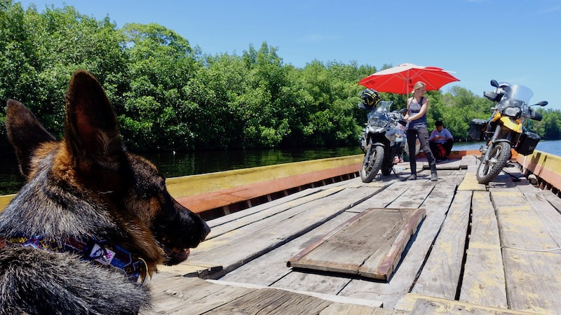 German Shepherd dog on wooden boat with woman and motorcycles