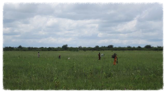 Villages work in the fields a few weeks after the last rains
