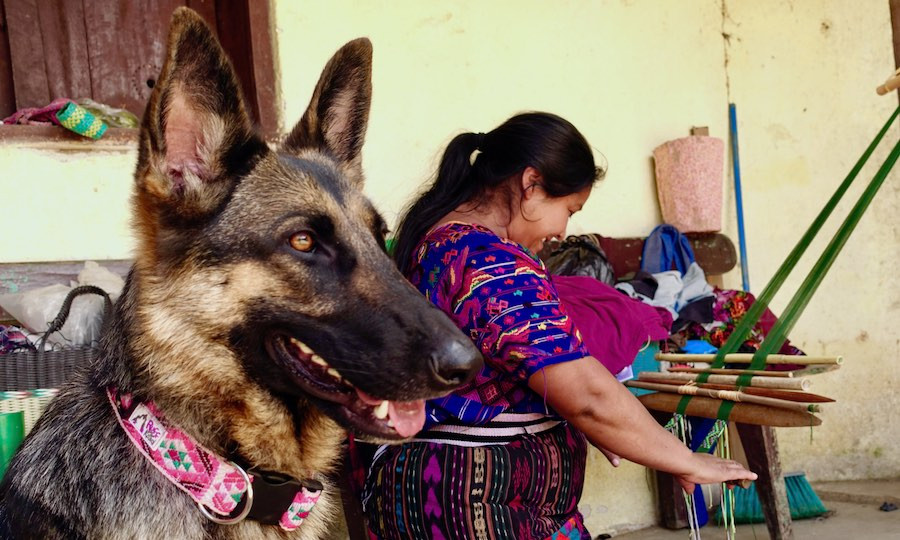 German Shepherd wears handmade dog collar while indigenous artisan weaves
