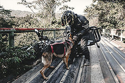 Greg Stone pets German Shepherd dog Moxie after they suffer an off-road motorcycle crash