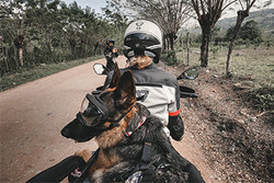 Jess Stone is ready to ride with German Shepherd Moxie in a motorcycle dog carrier