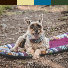 shaggy-brown-dog-lays-on-colorful-travel