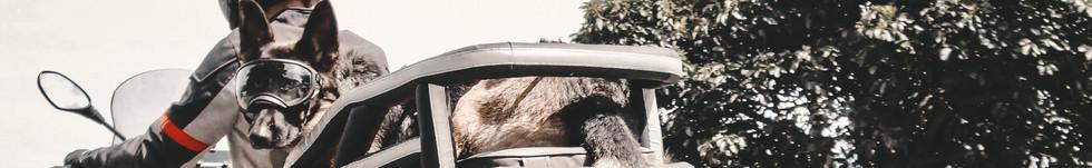 German-Shepherd-dog-wears-goggles-and-ri