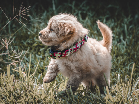 Unique Knotted Reflective Collars Built to Keep Your Dog Safe