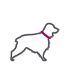 Simple icon of medium size dog