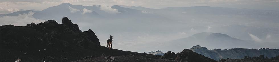 German-Shepherd-dog-silhouette-among-vas