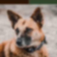 brown-beige-dog-on-sand-with-brown-green