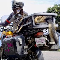 German Shepherd looks towards rear while riding on motorcycle dog carrier