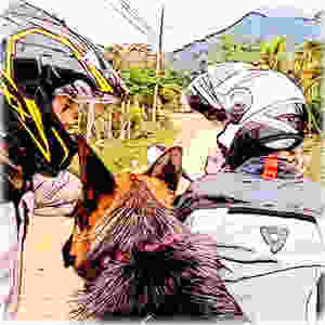 Cartoon of two motorcycle riders and a German Shepherd dog on a dirt road