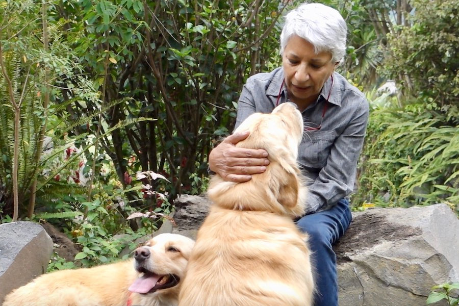 Older woman with two yellow dogs
