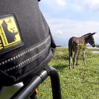 Donkey in grassy field as seen from motorcycle tank pannier