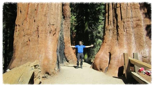 9 Greg between to big sequoias_edited.jpg