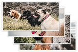 Stack of dog photos from RUFFLY dog gear catalogue