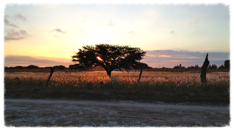 The campo ('field') outside San Felipe at sunrise