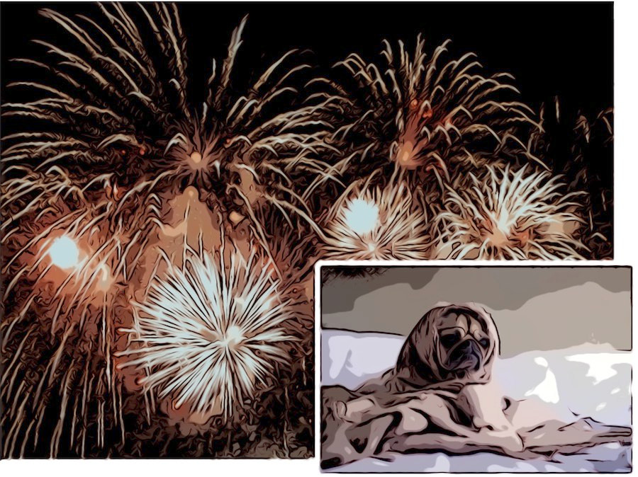 pug wrapped in blanket while fireworks explode in sky