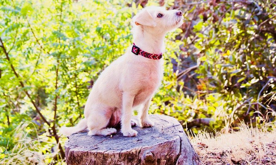 Terry-poo sits on tree stump wearing handmade macrame collar