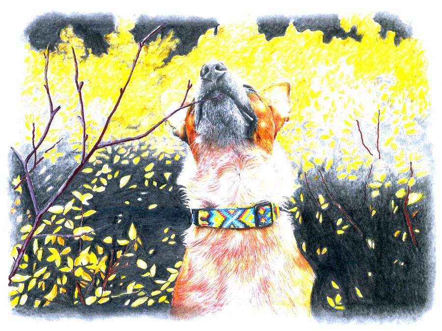 Dog wears handmade macrame friendship bracelet collar in meadow