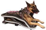 German Shepherd dog in K9 Moto Cockpit motorcycle dog carrier for adventure, tourer, and cruiser motorcycles