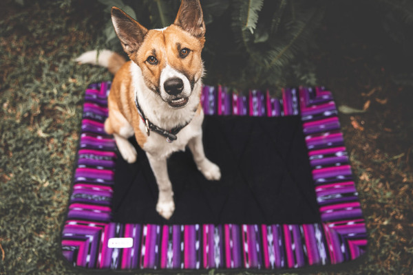The Waterproof Dog Travel Bed for at Home and Everywhere You Go