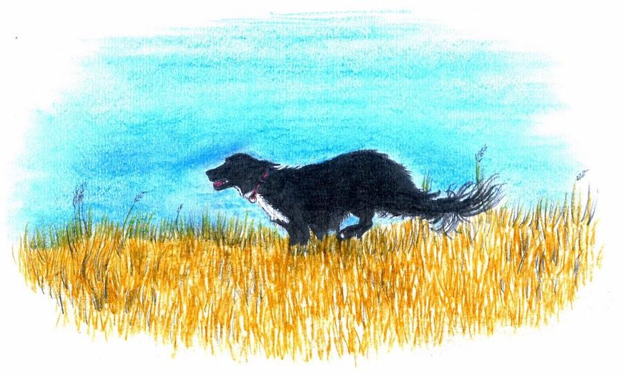 Black dog runs through field wearing handmade dog collar