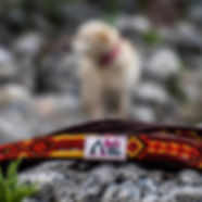 Plush handmade brown macrame leash lies on rock with dog in background