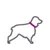 Stylized icon of medium grey cocker spaniel dog outline with pink collar