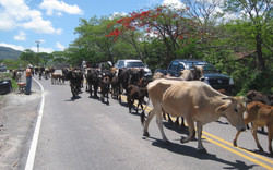 Panamerican Highway E of Choluteca, Hondur