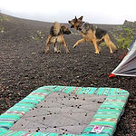 Two dogs play fight beside camping tent and handmade dog travel bed