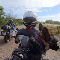 German Shepherd rides behind woman on motorcycle dog carrier on dirt road