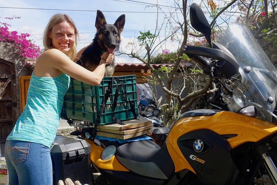 Big dog in basket on motorcycle