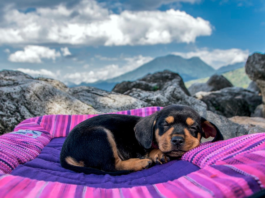 Small, cute, brown and black puppy dog snuggles on dog travel bed in the mountains