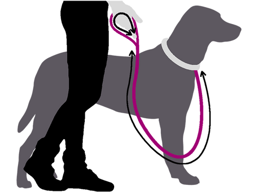 Silhouette of woman holds pink leash to grey dog with measurement arrows