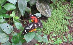 Butterfly conservatory, El Castillo, Costa
