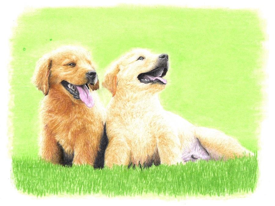 Drawing of Shar-Pei x Labrador-Retriever mix puppies