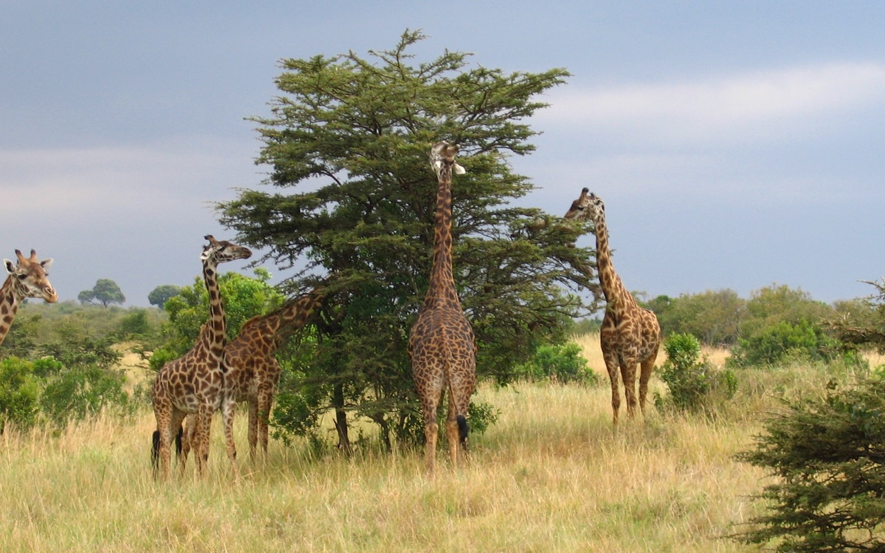 Masai Mara Game Reserve, Kenya