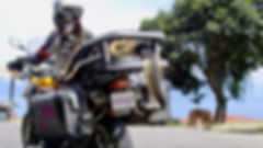 German Shepherd on motorcycle dog carrier riding with woman