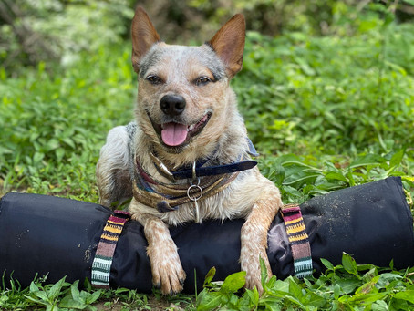The Woven Collection of Must-Have Outdoor Dog Accessories