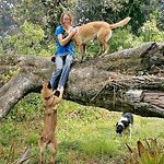 Malinoise and Border Collie jump up to join woman sitting in tree